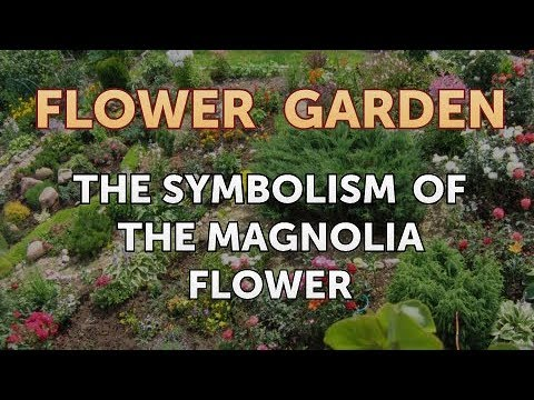 The Symbolism Of The Magnolia Flower Youtube