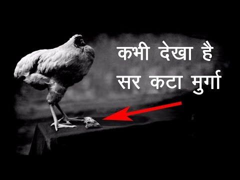 मौत के मुँह से लौटा एक सर कटा मुर्गा | Mike the headless chicken in Hindi