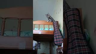 Кошка пугается. А потом убивает.