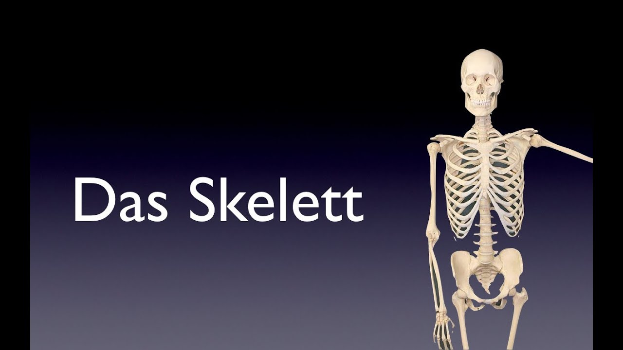 Das Skelett - YouTube