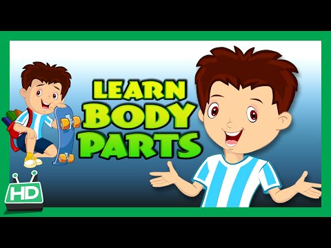 Body Parts for Kids Learning | Human Body Parts for Kids | KIDS HUT