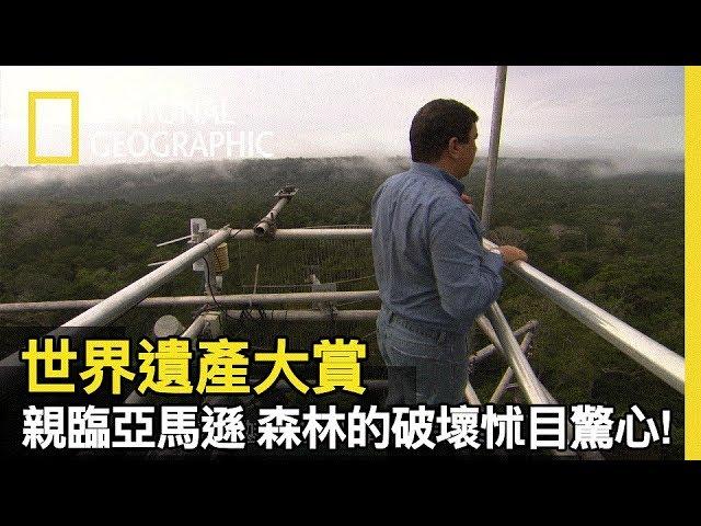 爬上約17層樓高塔!! 他在亞馬遜檢測二氧化碳濃度,為了拯救地球最後一片伊甸園!!【世界遺產大賞】