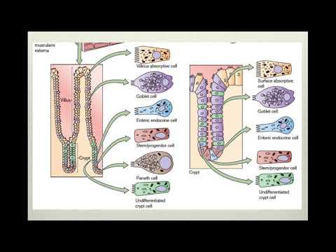 Que ocurre en el intestino delgado yahoo dating