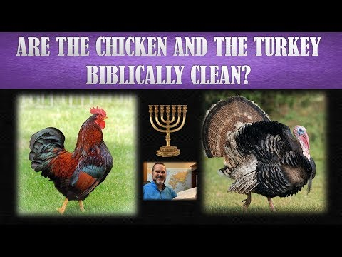 Are Chickens Clean Or Unclean?