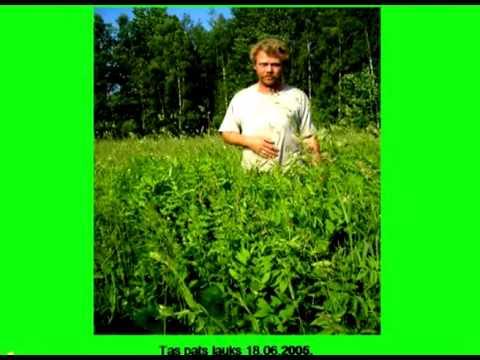 П. П. Вавиловым и а. А. Кондратьевым рекомендуются черезрядные посевы козлятника восточного с тимофеевкой луговой, кострецом безостым, двукисточником тростниковидным и другими. Но для посева лучше использовать свежеубранные семена или хранившиеся непродолжительное время.