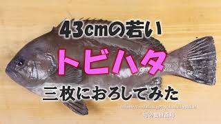 トビハタをさばく How to dress a Oval grouper .