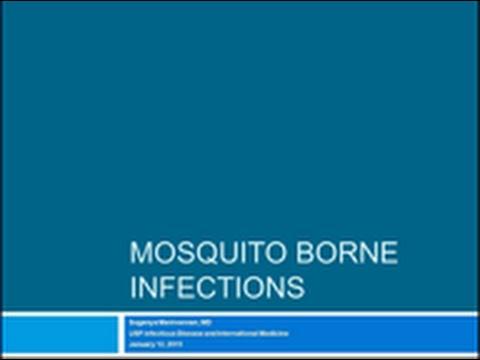 Mosquito-borne Infections - Suganya Mannivannan, MD