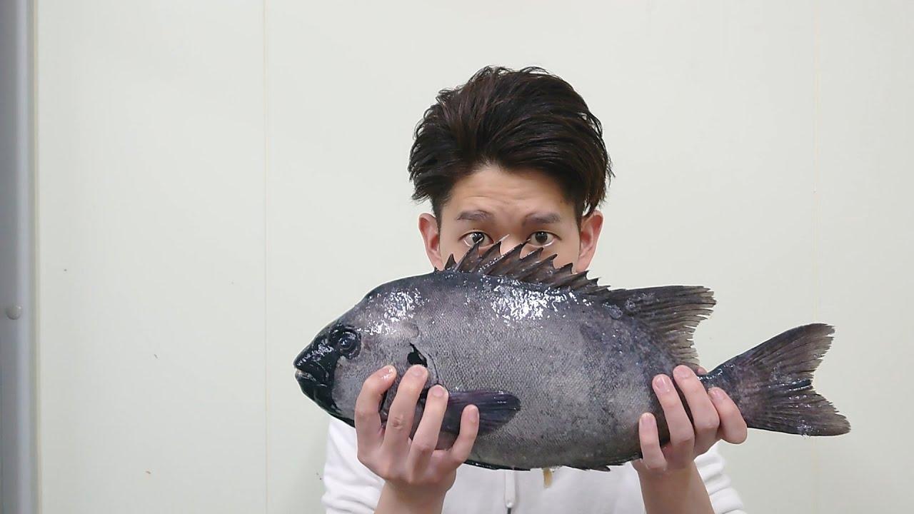 頑丈な魚!?石を食べる!?~家で出来る簡単な石鯛の捌き方~