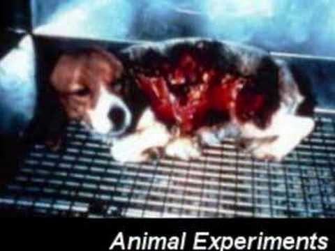 stopping animal testing and vivisection by passing a bill against animal cruelty Cruelty free international is an animal protection and advocacy animal testing, vivisection it campaigned at first against the use of dogs in vivisection.