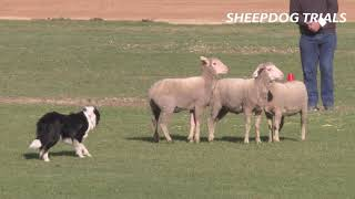 2019 Sheep Dog Trials | Royal Adelaide Show