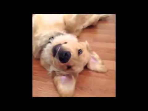 Excelente Compilación de vídeos graciosos de Animales para no parar de reírte - Parte 1