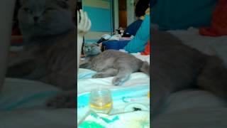 первые признаки начала родов у кошки