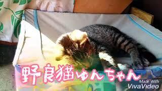 野良猫ゆんちゃん