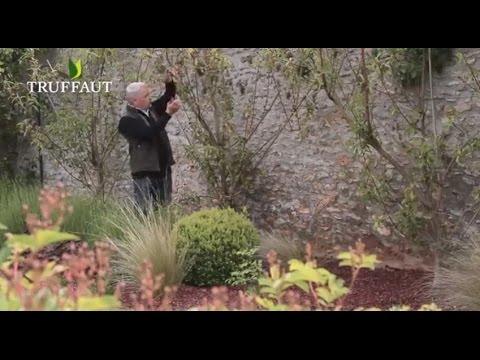 Comment tailler un p cher en vert jardinerie truffaut tv youtube - Comment tailler un pecher ...