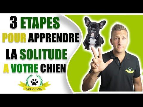Comment Dresser Son Chiot De 2 Mois - 10 techniques à savoir - Les bases de l'éducation canine - Tutorial