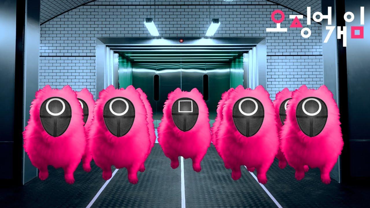 오징어게임(X)  오징어개임(O) - 분홍 댕댕이  Squid Game - Pink Soldiers (Dog Remix)
