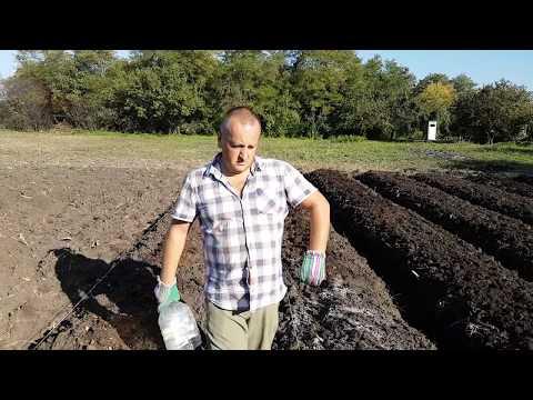 Как посадить 1000 кустов клубники за три дня