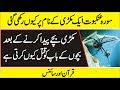 (Quran And Science )  Latest Scientific Research on Spider in Urdu/Hindi
