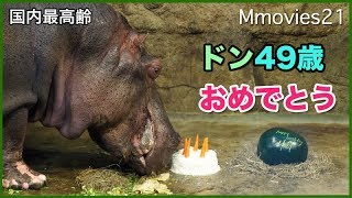 "Hippopotamus""Don"" male, 49 years old. Currently, Don is the oldest ..."
