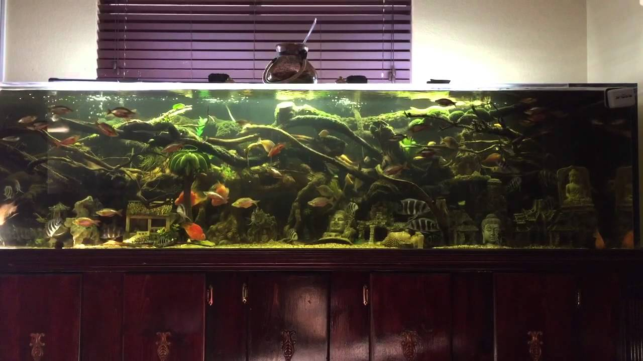 300 gallons freshwater tropical community fish youtube for 300 gallon fish tank