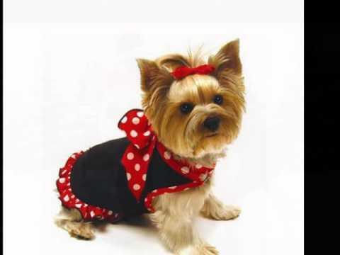 фирма тузик одежда для собак - YouTube
