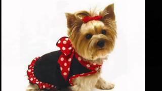 купить одежду для собак б у недорого