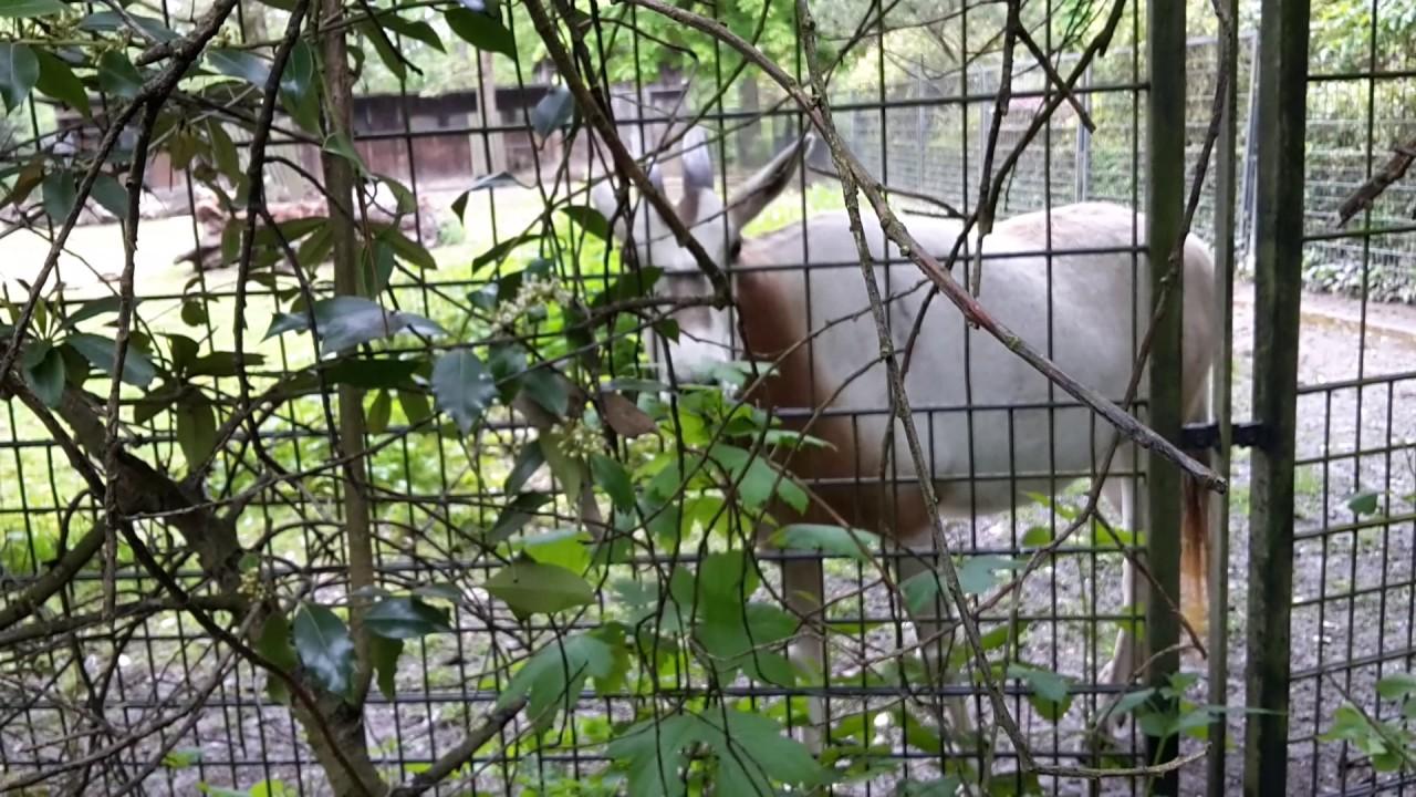 Krefelder Zoo Brandursache