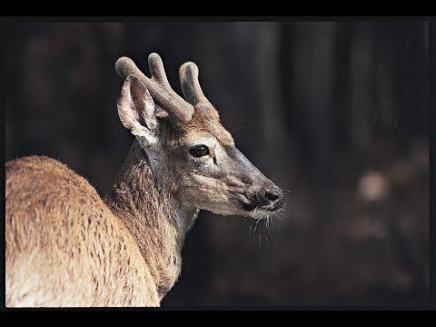 South Carolina Deer Tag Changes