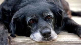 Как продлить жизнь любимой собаке