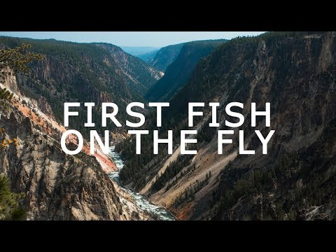 FIRST TIME FLY FISHING :  CUTTHROAT TROUT YELLOWSTONE NATIONAL PARK