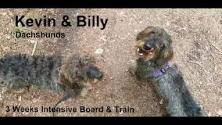 Billy & Kevin- Dachshunds - 3 Weeks Residential Dog Training