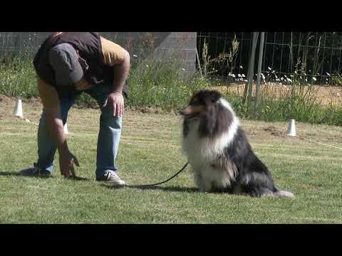 Centre Herv Pupier - Formation Educateur canin.