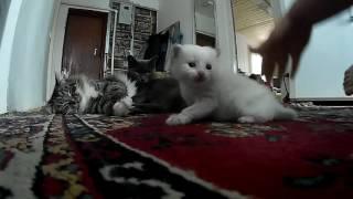 Кошки.  Воспитание ребенком