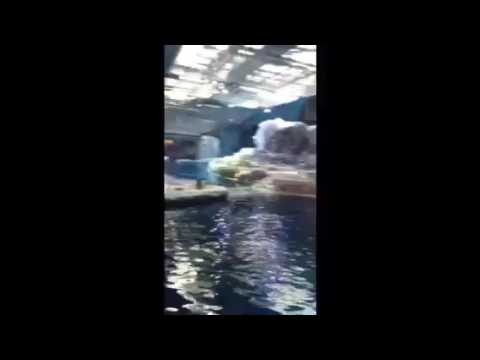 Polk Penguin Conservation Center Detroit Zoo Michigan