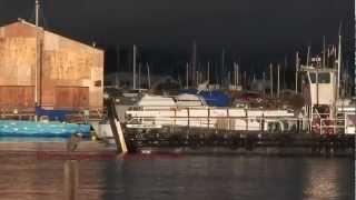 SeaBirds Go Crazy - Flock of Cormorants Feeding Frenzy San Francisco Bay