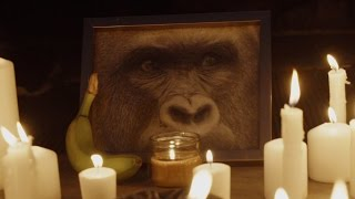 A CANDLELIGHT VIGIL FOR HARAMBE