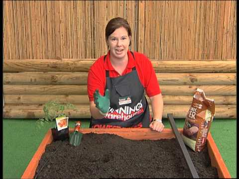 How To Grow Tomatoes - DIY At Bunnings