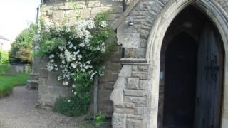 Beautiful Rose At Hamstall Ridware