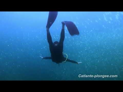 Vidéo sous marine de l'île Saint Vincent dans les Caraïbes