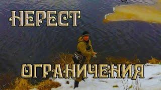 3 основных ограничения рыбалки в нерестовый период в Свердловской области