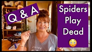 Funny Q&A ~ Spiders Play Dead😳  Laughter & Entertaining Thoughts With A Touch Of Encouragement. Joy