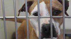 The Lexington Humane Society
