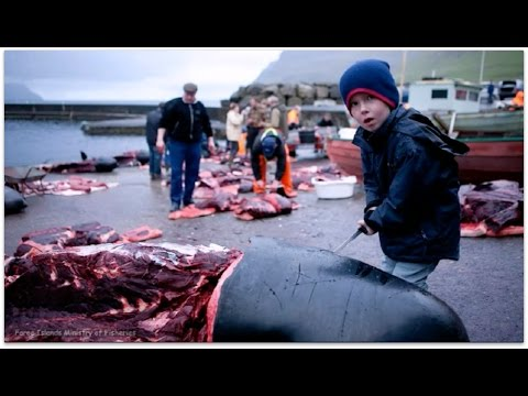"FAW: ""The Truth About The Faroe Islands"""
