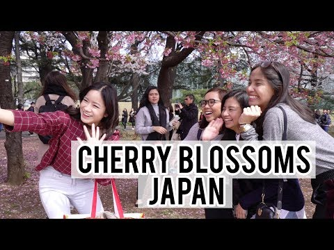 Driving to the BEST places in Tokyo to see Cherry Blossoms / Sakura