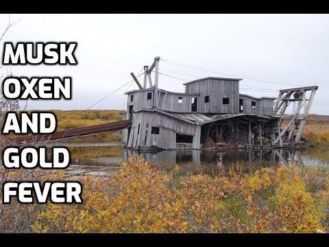 Alaska Gold Mining: Dredging In The Wilderness