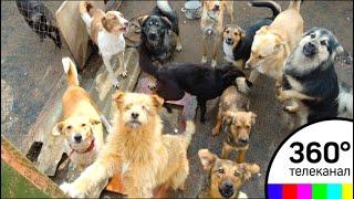 Приют для животных появился в одной из квартир в Балашихе
