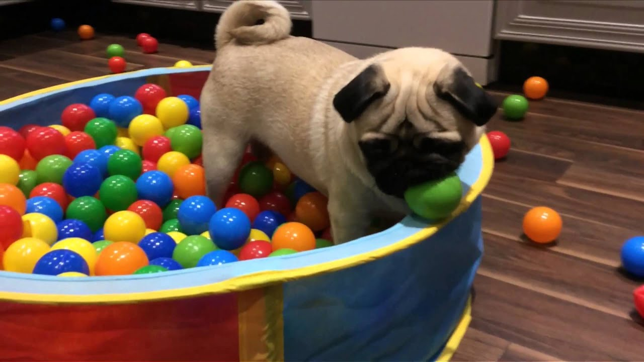 Why Dogs Like Balls