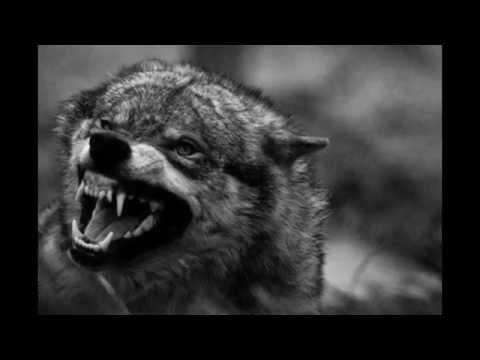 Блокада Ленинграда 240 ФОТО Часть 1 ХРОНИКИ