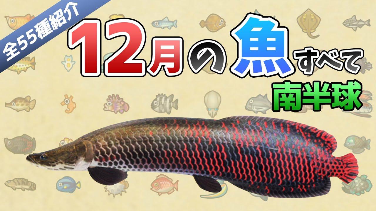 9月 あつ森 魚 南半球