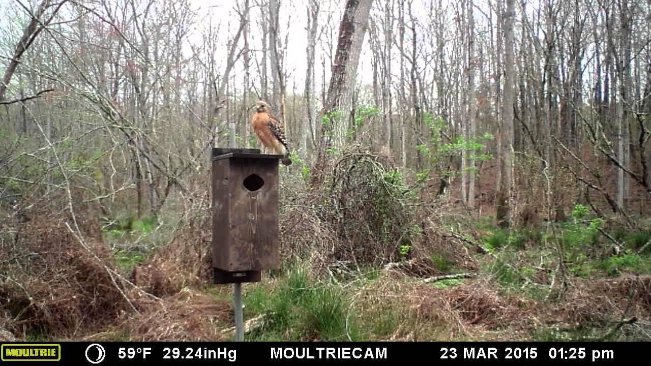 M 990i watching wood duck nesting box youtube m 990i watching wood duck nesting box publicscrutiny Choice Image